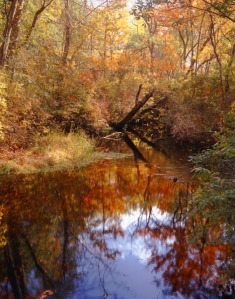Tuckahoe_River_Fall_Reflections