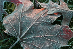 frosty-morning-1